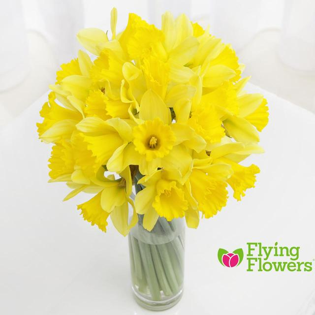 Flying Flowers Daffodils 20 stems