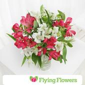 Flying Flowers Mixed Alstroemeria