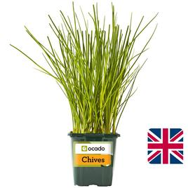 Ocado British Growing Chives | Ocado