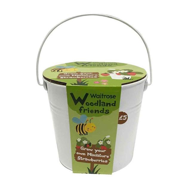 Waitrose grow your own strawberries from ocado waitrose grow your own strawberries negle Gallery