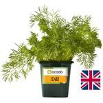 Ocado Growing Dill