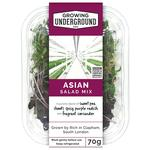 Growing Underground Asian Micro Herbs Mix