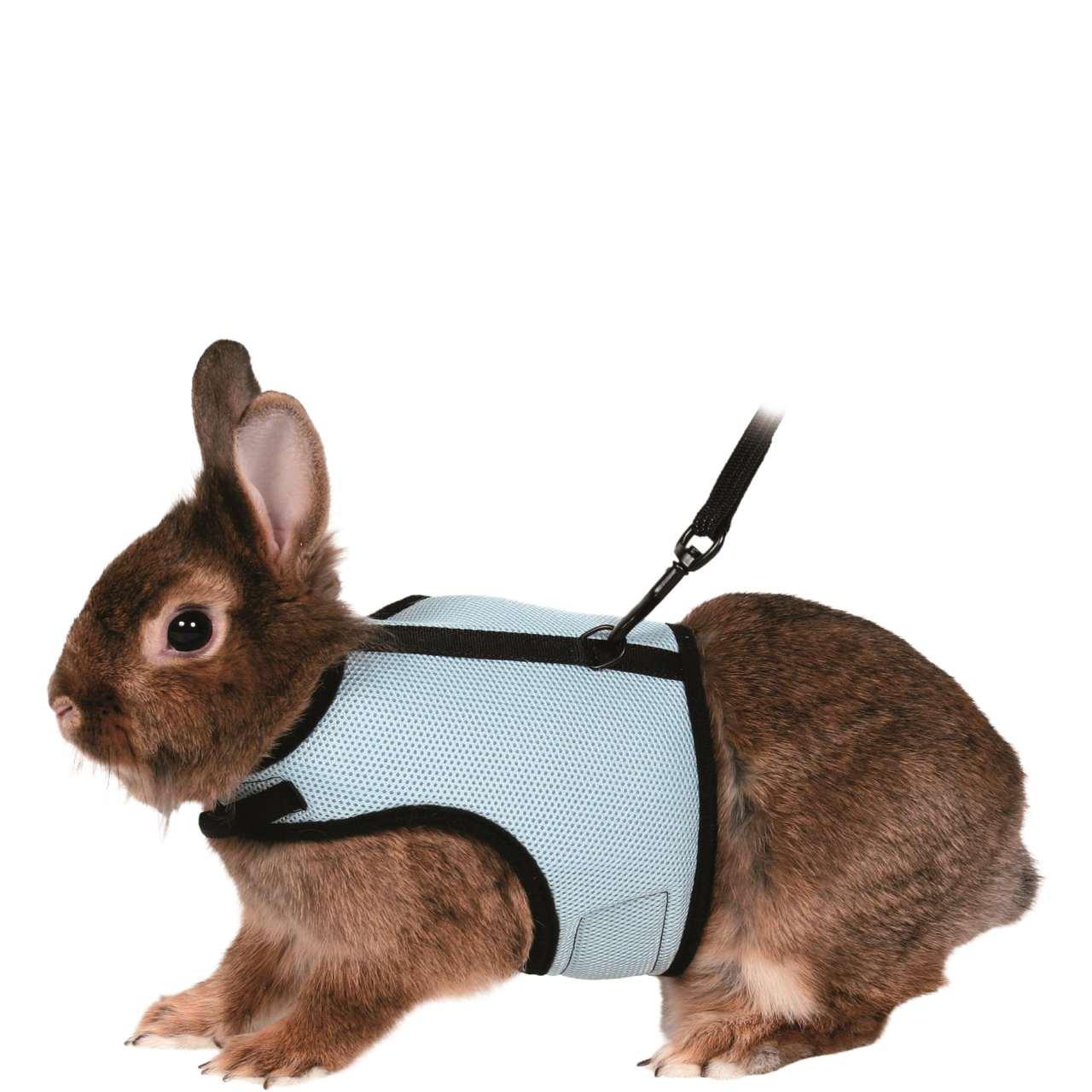 Как сделать из кошки кролика