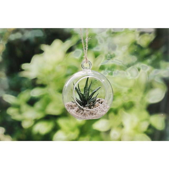 Plantpak Glass Globe Terrarium From Ocado