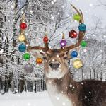 Stag With Baubles Charity Christmas Cards