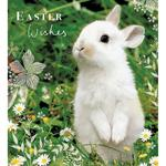 Sweet Spring Easter Cards
