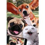 Hand Finished Selfie Dogs Card
