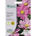 Johnsons Seeds - RHS Cosmos Sensation Pinkie
