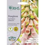 Johnsons Seeds - RHS Foxglove Sutton's Apricot
