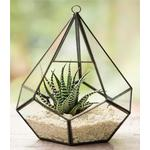 Plantpak Glass Teardrop Terrarium, 25cm High 17cm Diameter