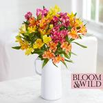 Bloom & Wild at home The Summer Alstroemeria