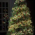 480 LED Cluster Christmas Tree Lights, Multi Colour