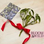 Bloom & Wild At Home The Christmas Mistletoe