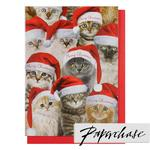 Paperchase Photographic Cats Christmas Cards