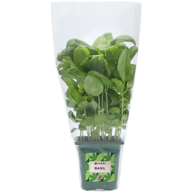 Ocado British Growing Basil