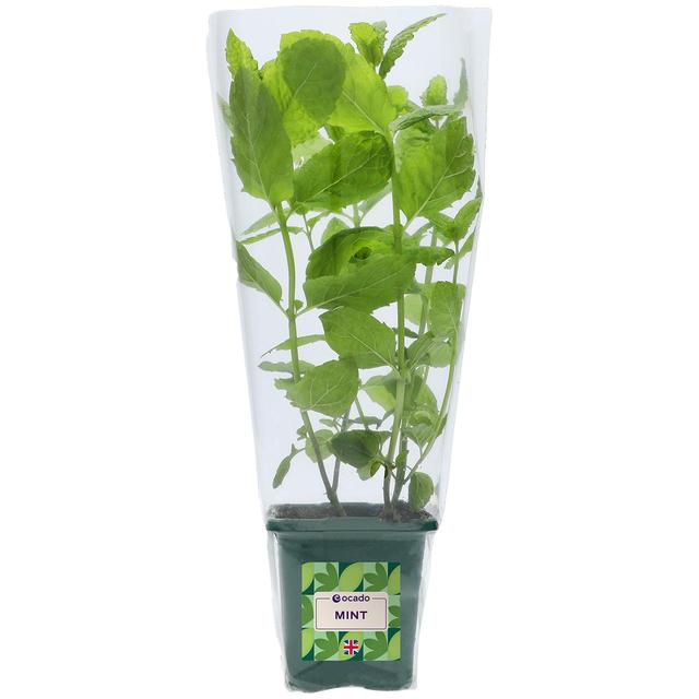 Ocado British Growing Mint