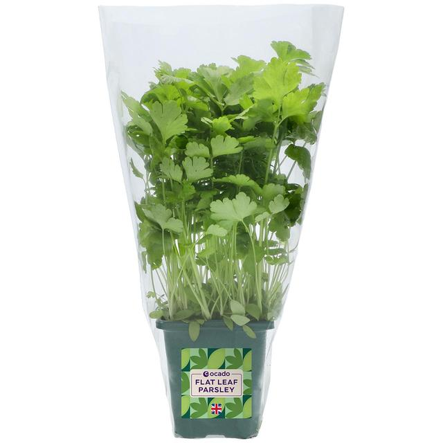 Ocado British Growing Flat Leaf Parsley