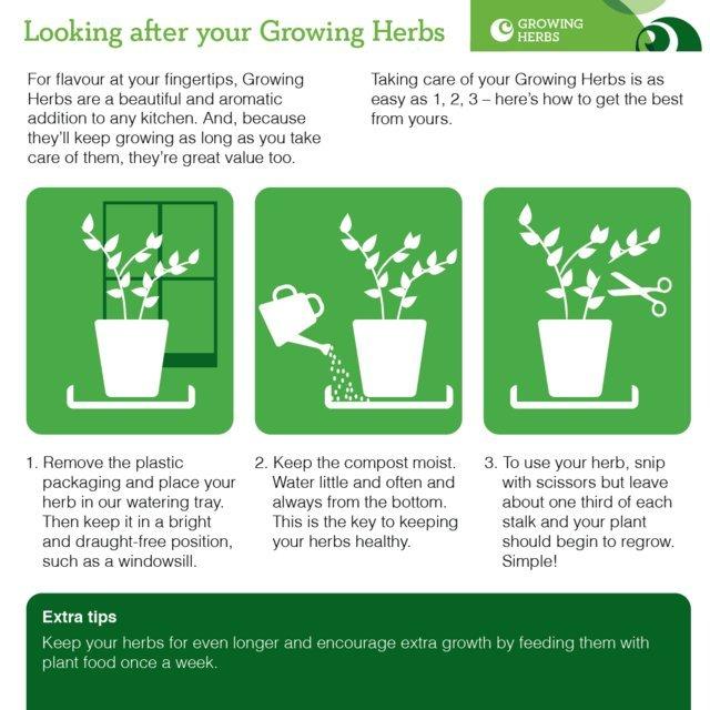 ocado growing herb watering tray from ocado. Black Bedroom Furniture Sets. Home Design Ideas