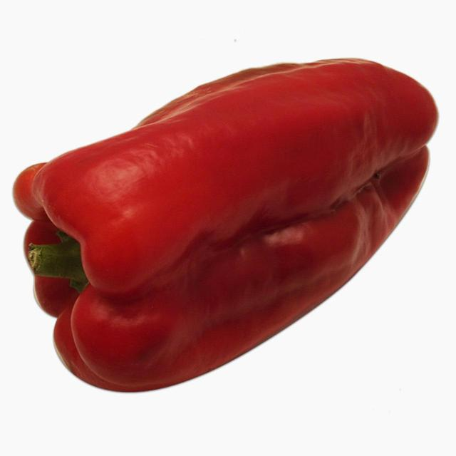 Natoora 1 Giant Red-Green Pepper