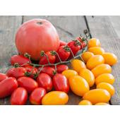 Natoora Seasonal Tomato Selection